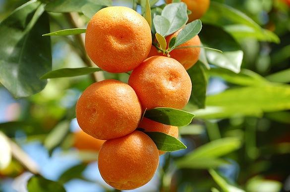 oranges, Gran Canaria