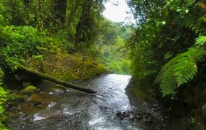 Watch your step! A timid stream may suddenly become a waterfall | Malia Williams