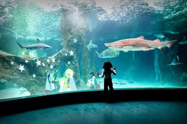 Aquarium at the Madrid Zoo   cuellar.