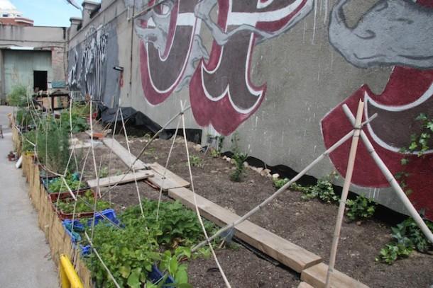 Community garden in the patio at La Tabacalera, Madrid | Tomás DeMatteis